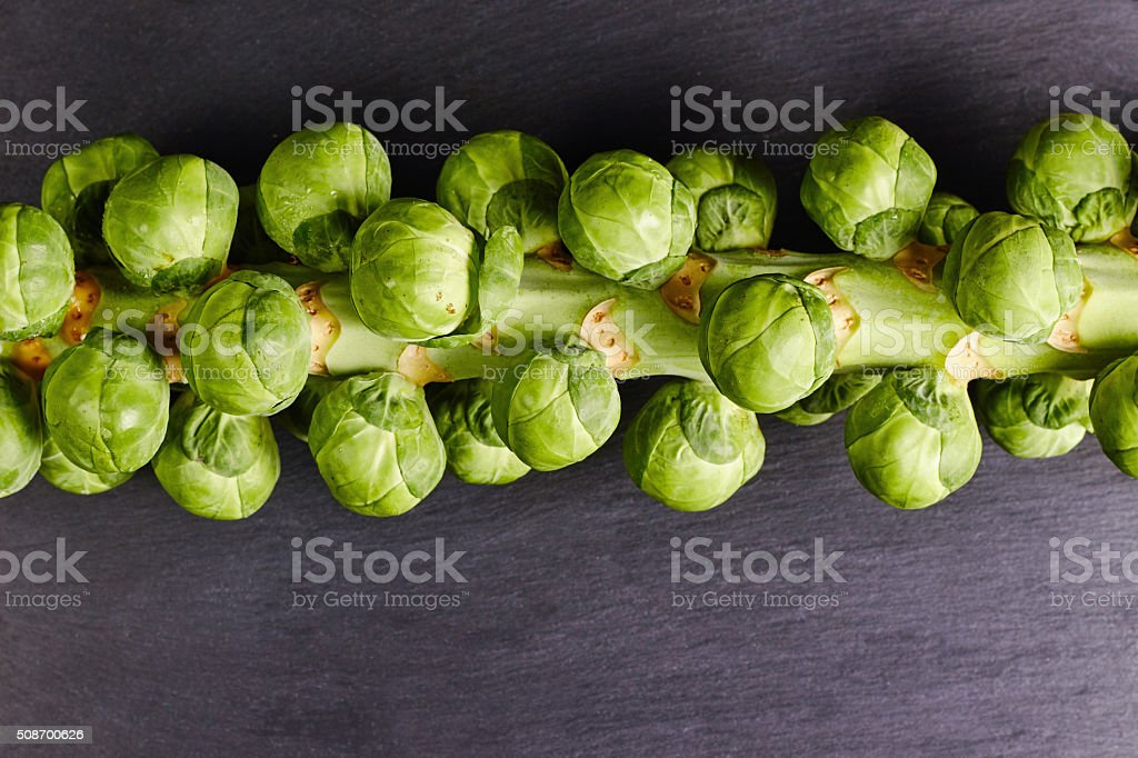 Brussels sprouts on a stalk stock photo