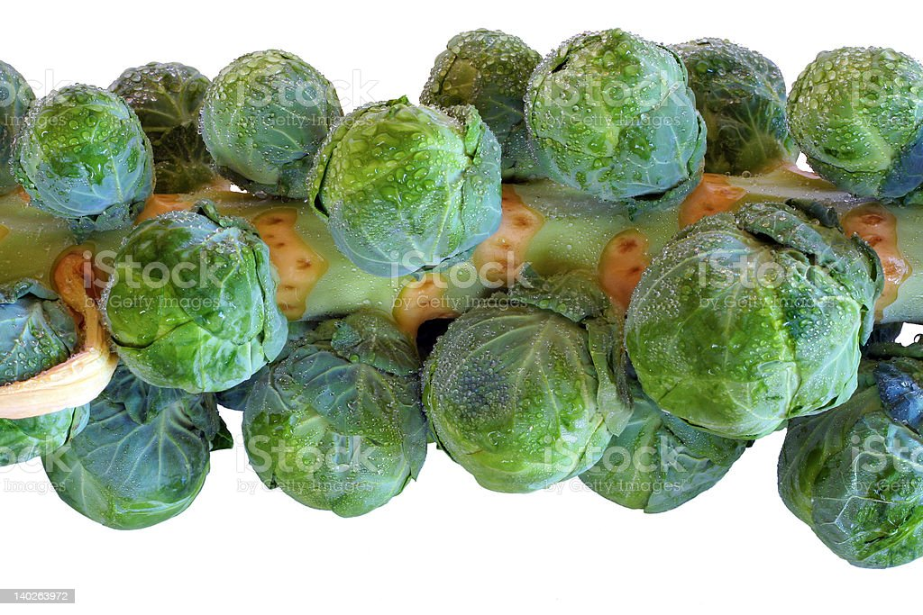 Brussels Sprouts (isolated, close-up) royalty-free stock photo
