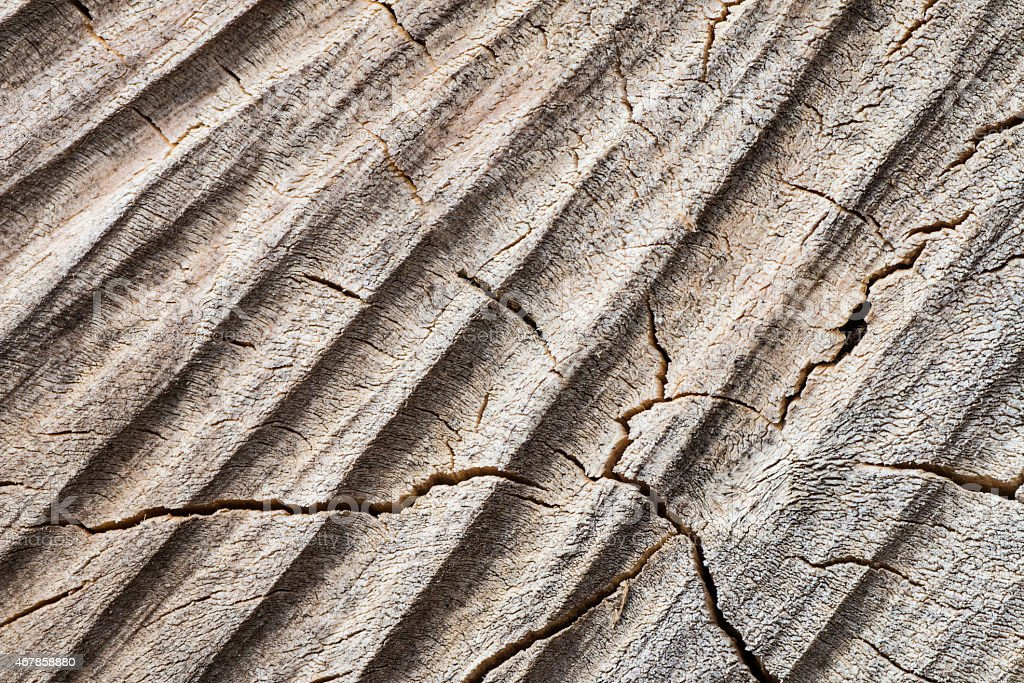 Brut wood tree striated with diagonals lines texture background stock photo