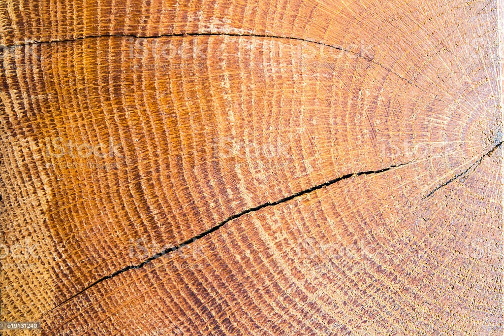 Brut wood tree with cracks texture background stock photo