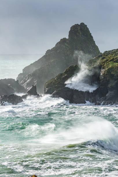 brutal sea,  kynance cove, cornwall - uccello marino foto e immagini stock