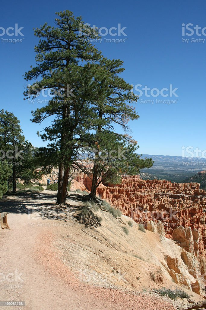 Bryce Canyon Baum stock photo