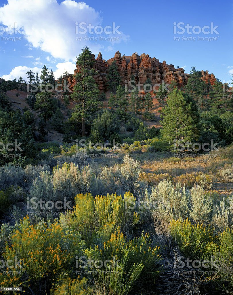 Bryce Canyon Flowers royalty-free stock photo