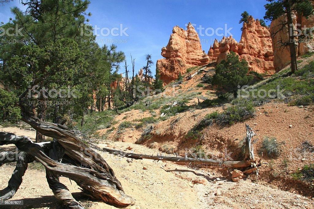 Bryce Canyon Hoodoos, Utah, Southwest USA royalty-free stock photo