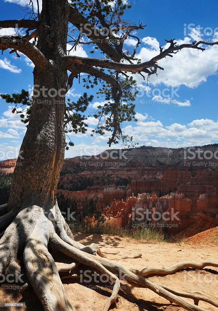 Bryce Canyon National Park View of Bryce Canyon with it's world famous Hoodoo's. Bryce Canyon Stock Photo