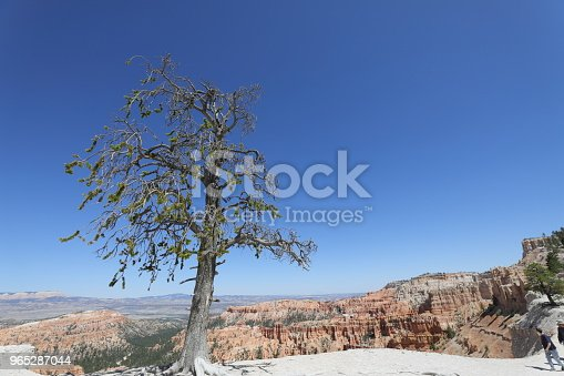 Bryce Canyon National Park Stock Photo & More Pictures of Bryce Canyon