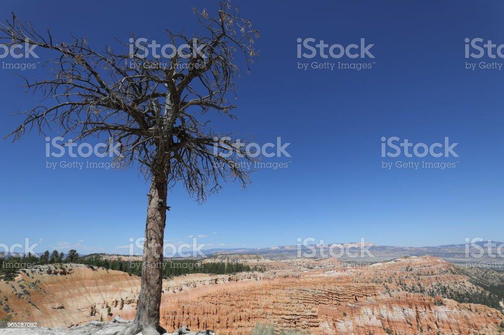 Bryce canyon national park zbiór zdjęć royalty-free