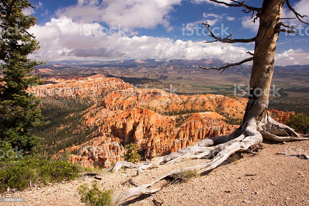 Bryce Canyon, Utah, USA royalty-free stock photo