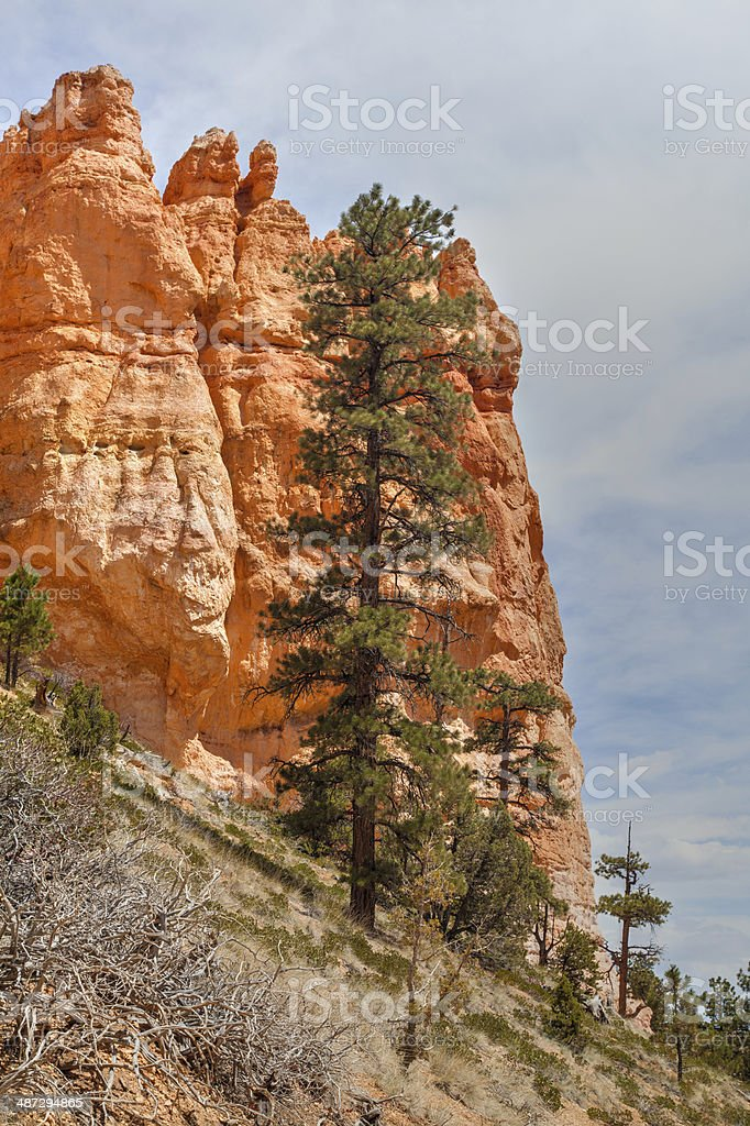 Bryce National Park royalty-free stock photo
