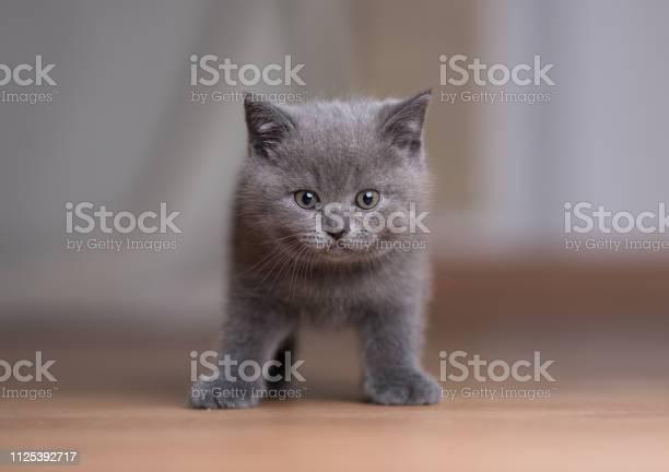Bsh kitten picture id1125392717?b=1&k=6&m=1125392717&s=612x612&h=fwxr il jwdbdkht cwzal7d16k9btbrlhivsij0oea=