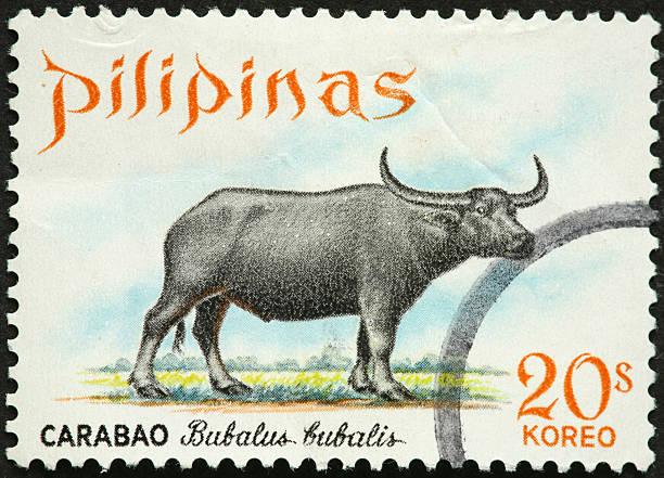 bubalus bubalis water buffalo on a Philippine stamp stock photo