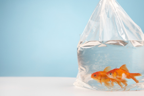 istock Bubble fish 2 115883161