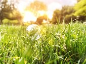 istock Bubble on a grass 1259059875