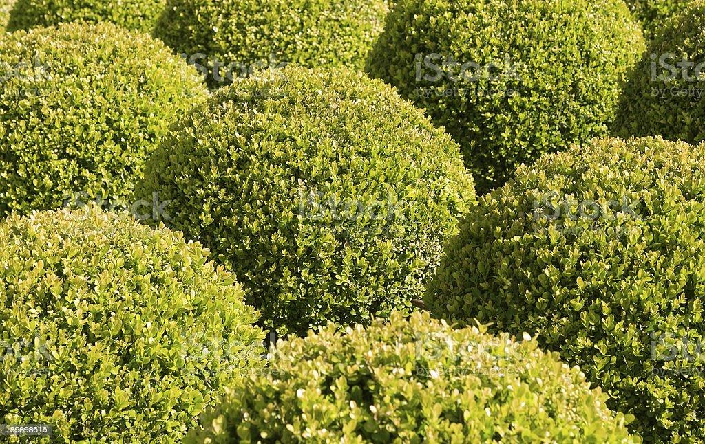 Blase Bäumen Lizenzfreies stock-foto