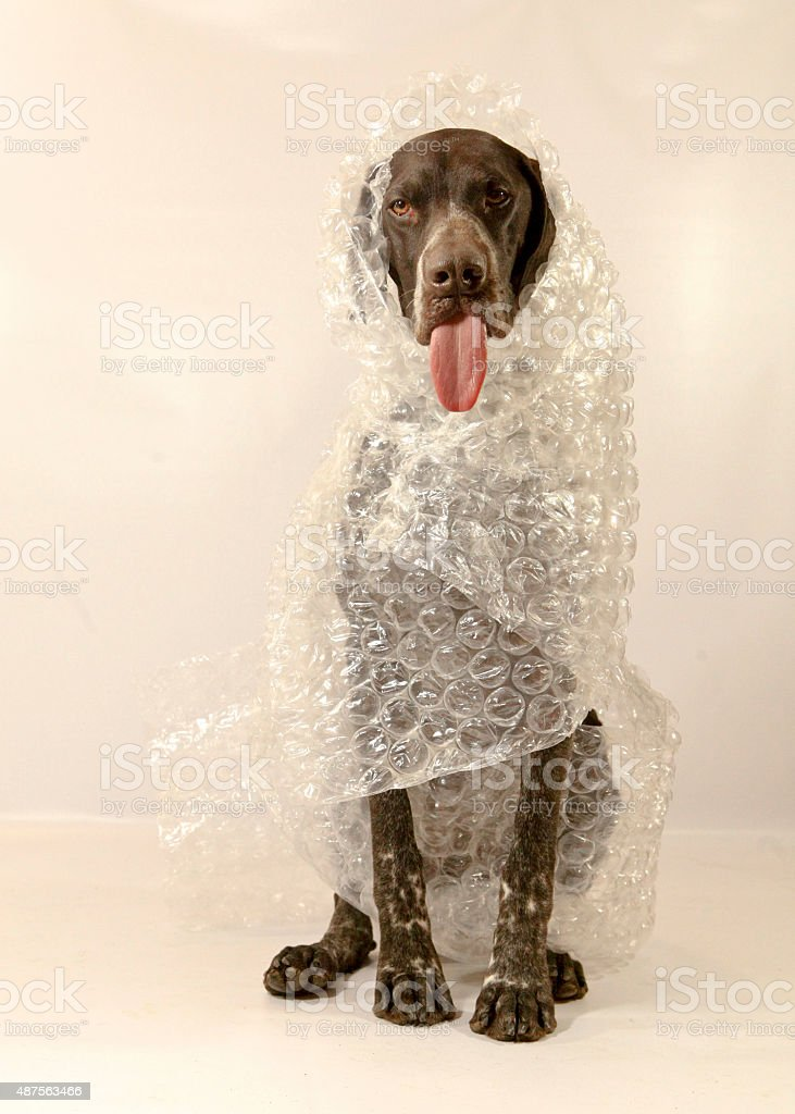Bubble Wrapped Dog stock photo
