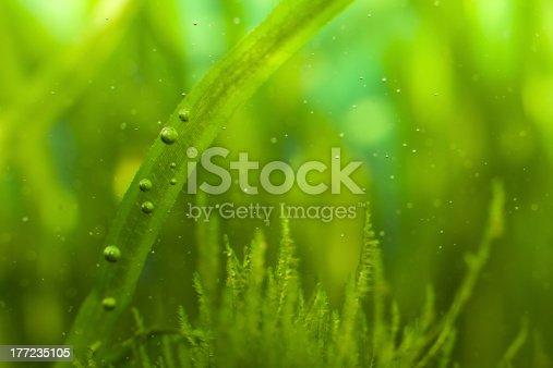 istock Bubbles and algae 177235105