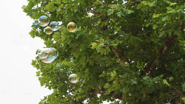 Bubbles in Flight 5 stock photo