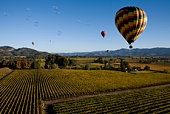 Hot Air balloons sailing over Napa Valley in California on a beautiful misty morning.