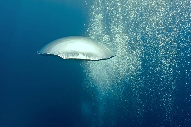 Bubbles underwater stock photo