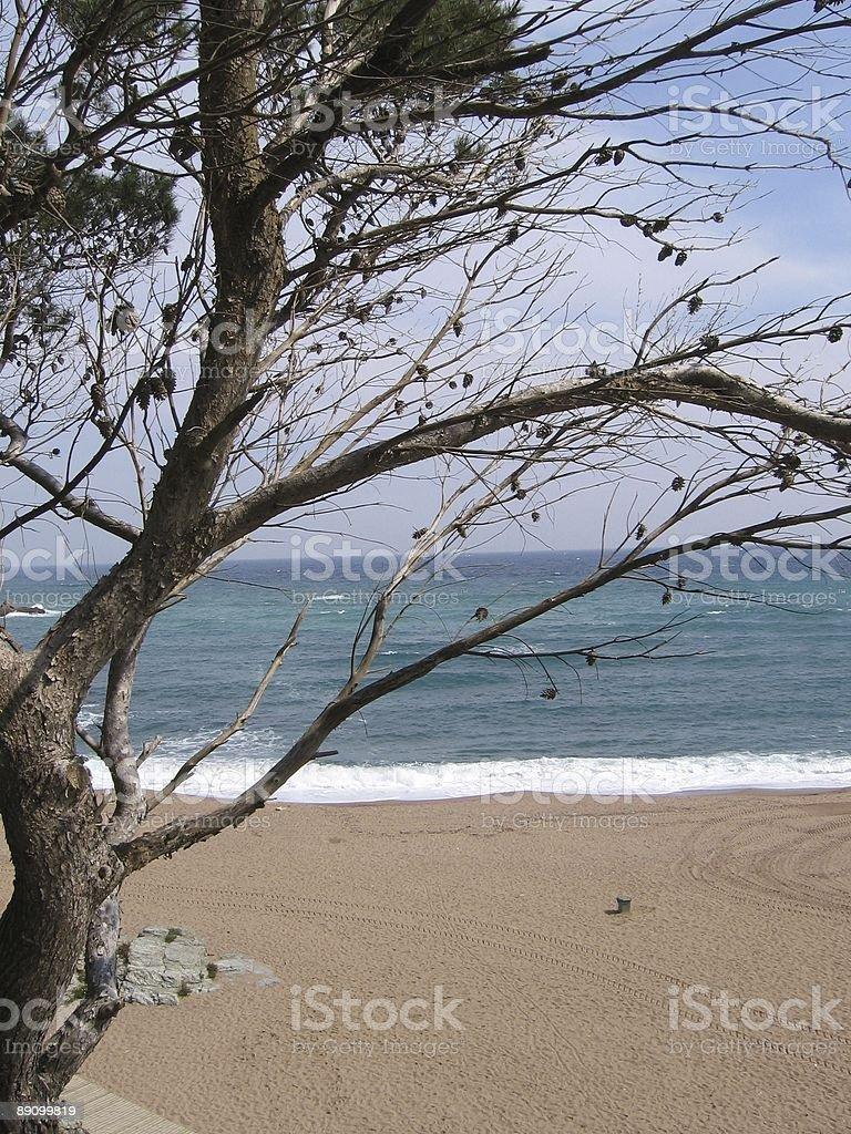 Bucht mit Baum und Brandung royalty-free stock photo