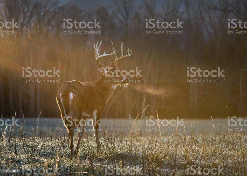 Buck stehen in der Sonne – Foto