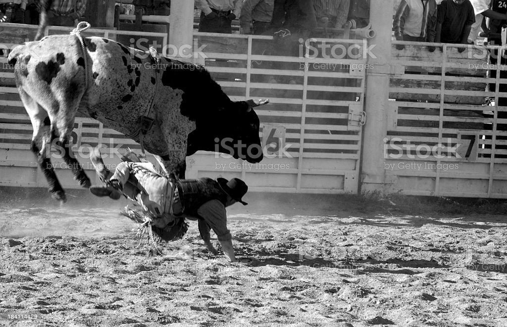 Bucked Off stock photo