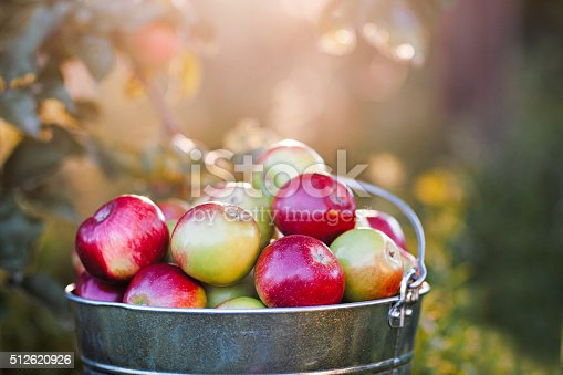 istock bucket full of ripe apples in sunset 512620926