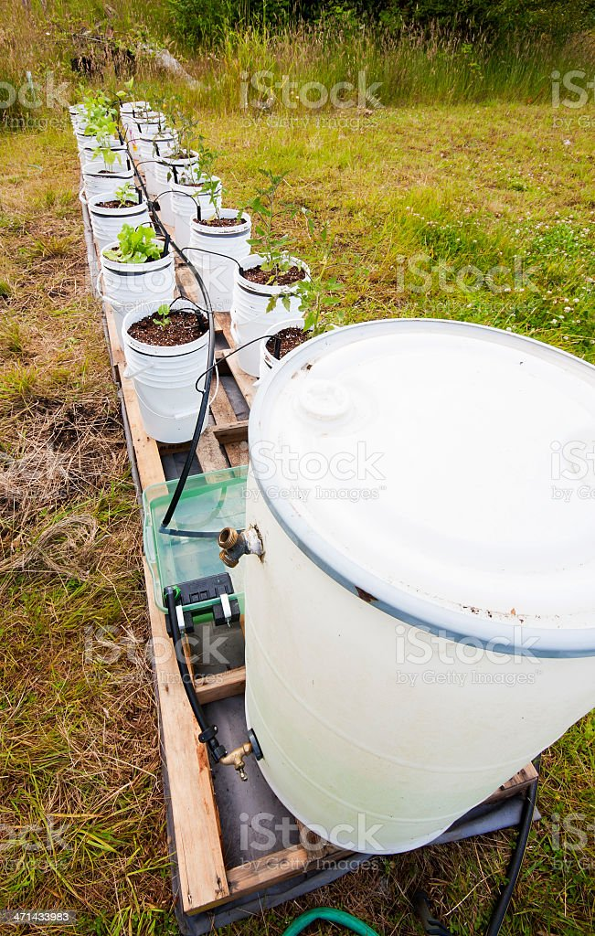 Bucket Garden stock photo