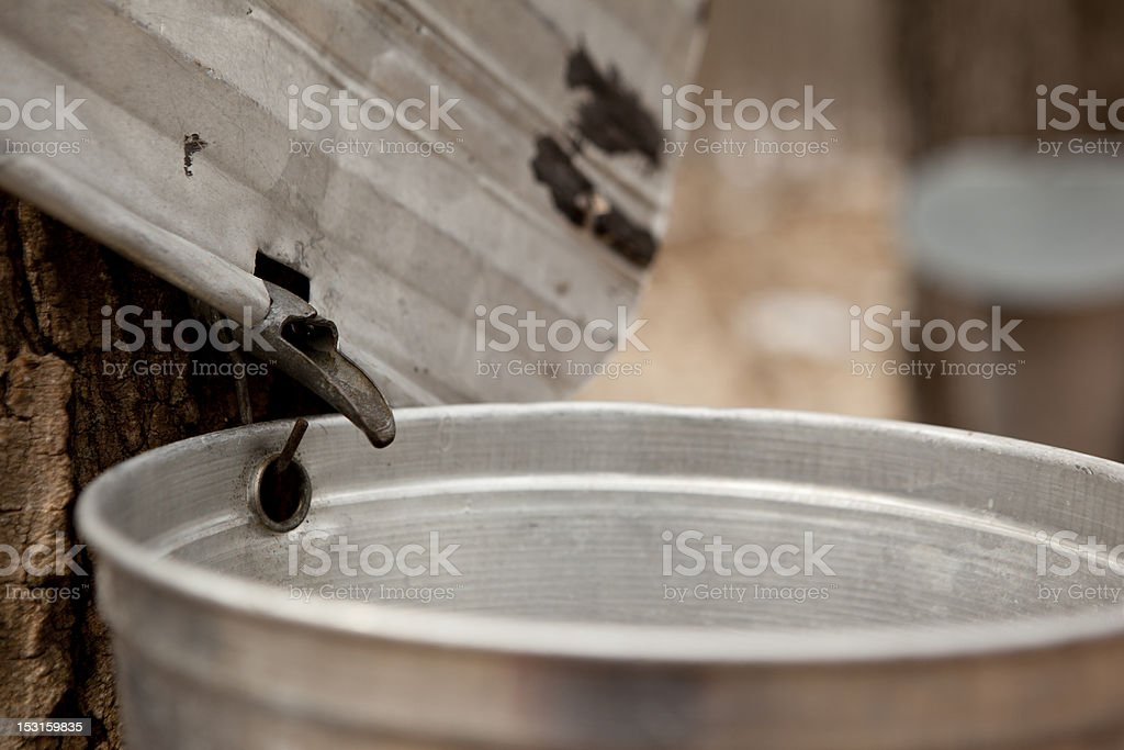 Bucket of sap royalty-free stock photo