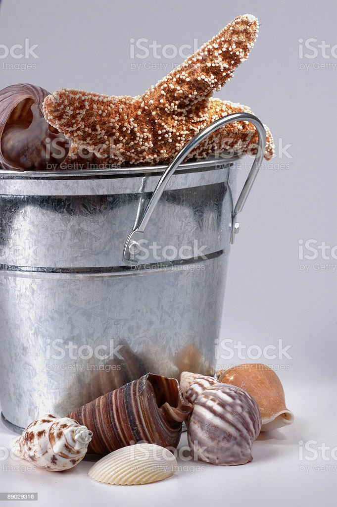 bucket of shells 2 royalty-free stock photo