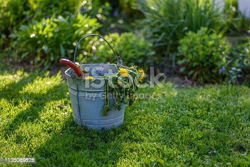 Pulling weeds in spring garden