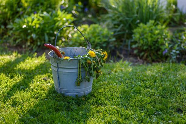 emmer van onkruid naast lentetuin - wieden stockfoto's en -beelden