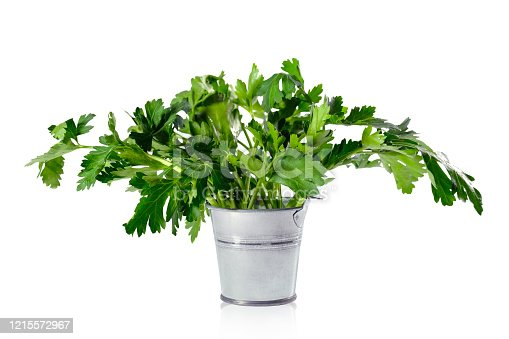 Bucket with fresh fragrant parsley on a white background.
