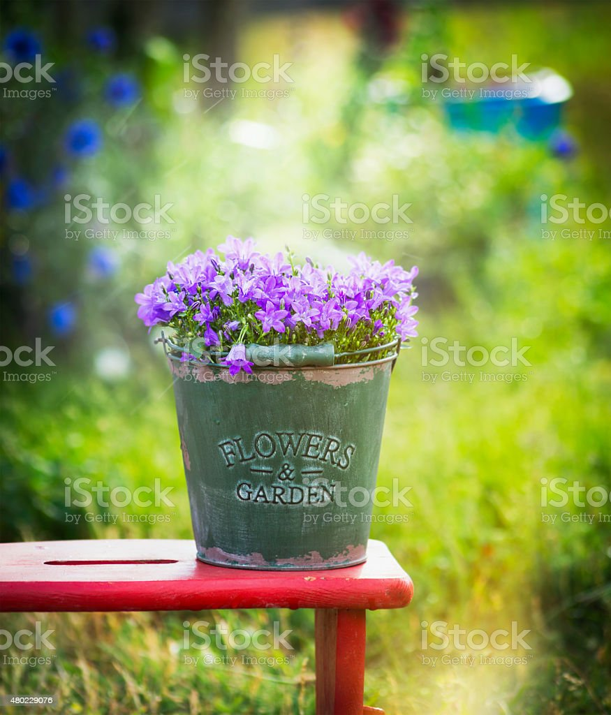 Bucket with garden bell flowers on red little stool, outdoor stock photo