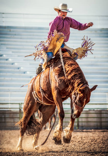 Acción bronco bucking - foto de stock