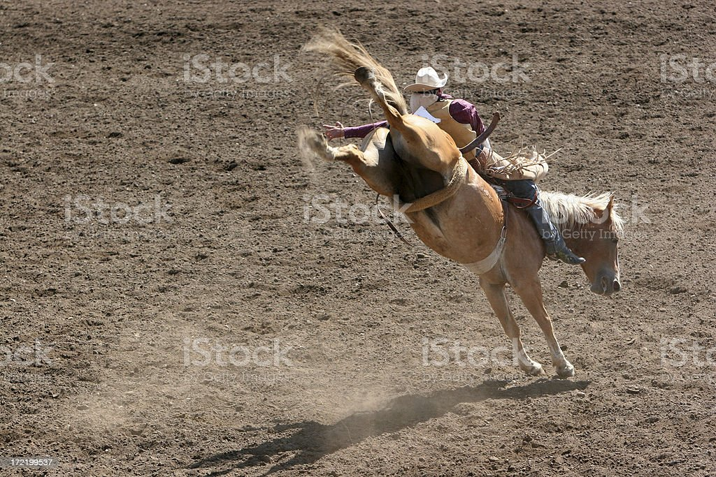 Bucking Bronco at the Rodeo stock photo