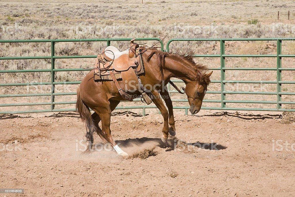 Bucking horse stock photo