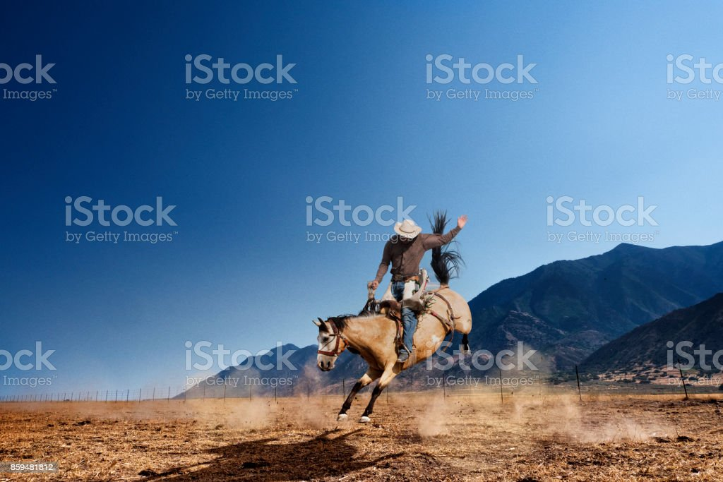 Bucking Horse stock photo