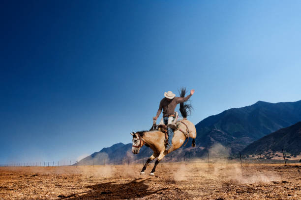 Bucking caballos - foto de stock