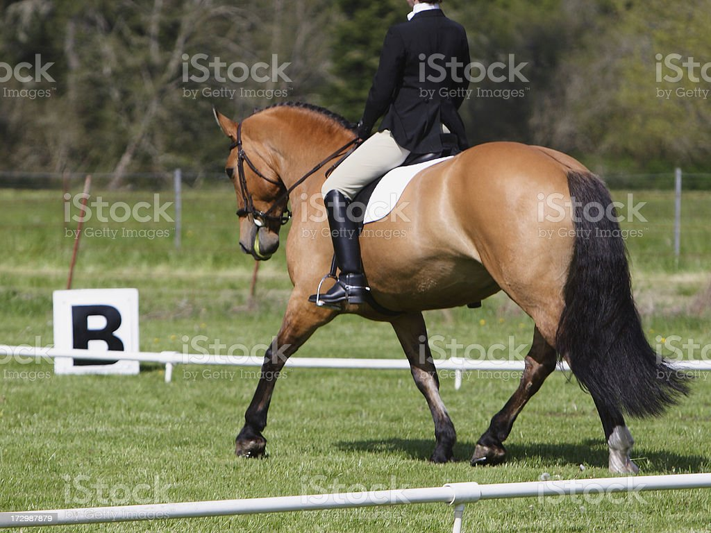 Buckskin Dressage stock photo