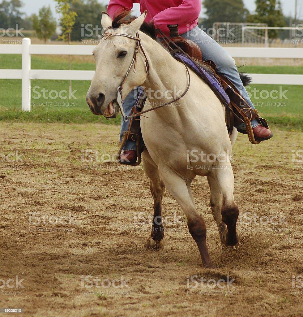 Buckskin Horse with Rider stock photo