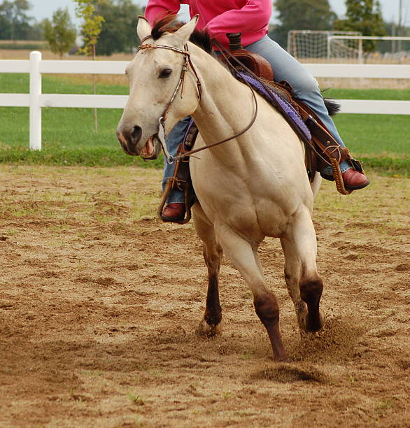 Buckskin Horse with Rider stock photo