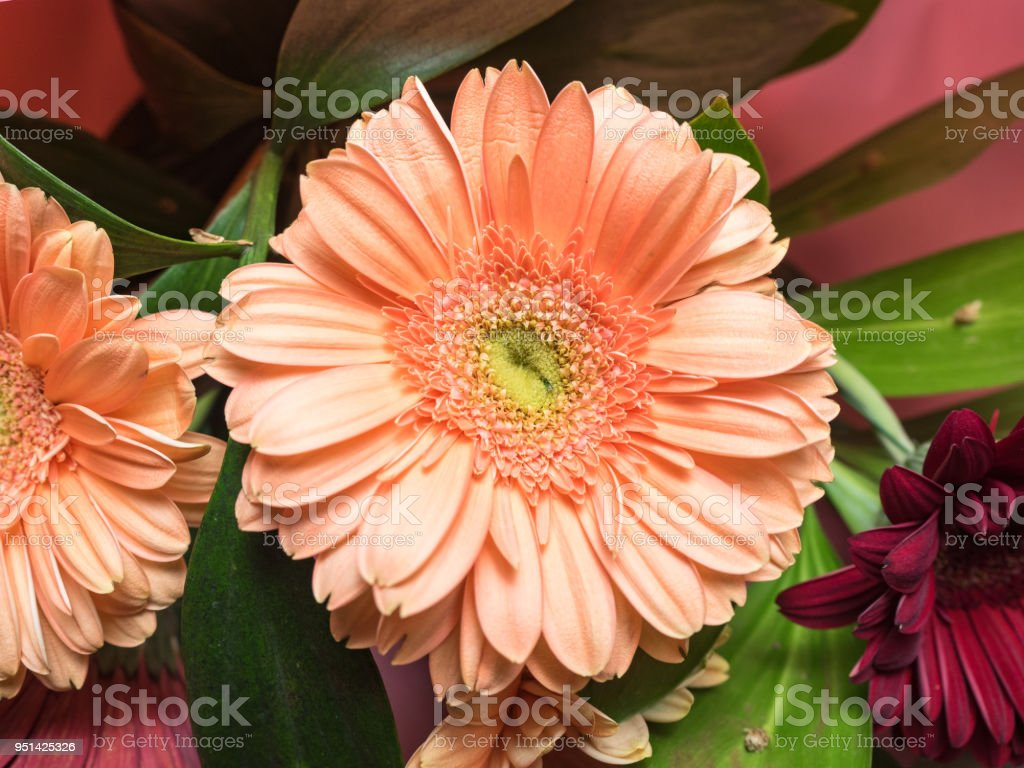 Bud chrysanthemum flower closeup flower with decorative greenery bud chrysanthemum flower closeup flower with decorative greenery decoration made of chrysanthemums daisies izmirmasajfo