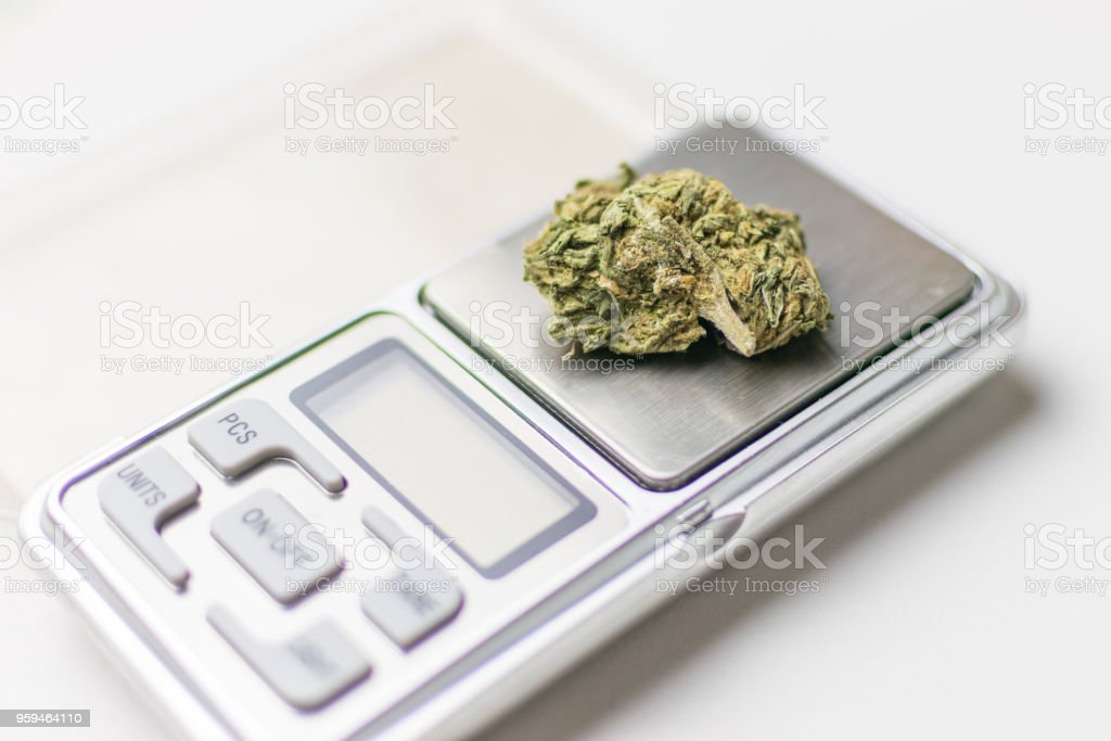 Bud of marijuana on a jewelry scales. stock photo
