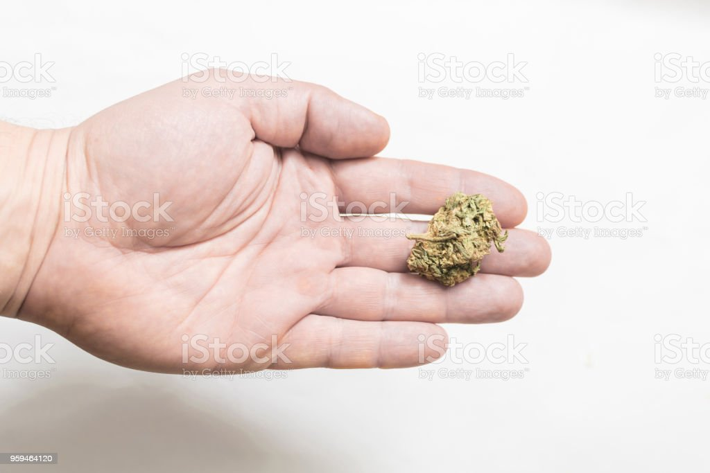 A bud of marijuana on a man's hand. stock photo