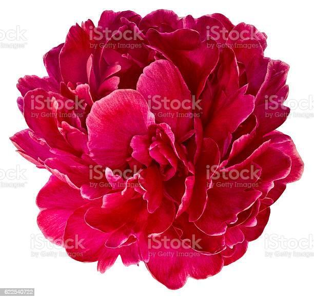 Bud red peony 2 picture id622540722?b=1&k=6&m=622540722&s=612x612&h=5lyzn5z ddkgjcooyffatlqtq3ndnxcjwfqogi1nnvi=