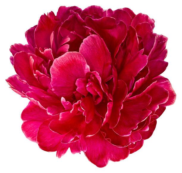 Bud red peony 2 picture id622540722?b=1&k=6&m=622540722&s=612x612&w=0&h=zgn2y5wjbnw4xjwvjhsoptkeuqucmkeb24a6e9gekru=