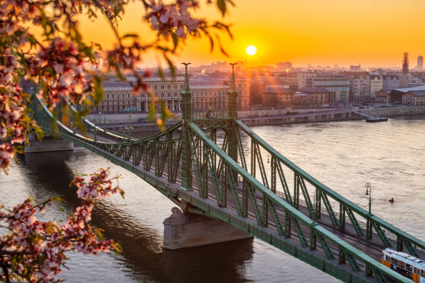Budapest, Hungary - Beautiful Liberty Bridge over River Danube with traditional yellow tram  at sunrise with cherry blossom at foreground stock photo