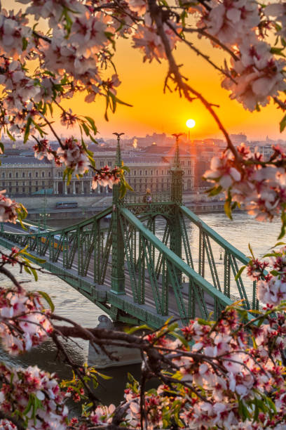 Budapest, Hungary - Spring in Budapest with beautiful Liberty Bridge over River Danube with traditional yellow tram at sunrise stock photo