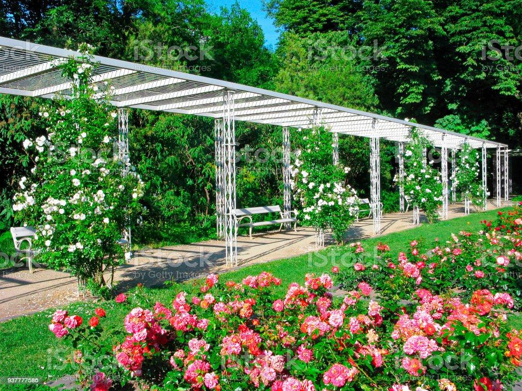 Budapest, park the Rose Garden on Margaret Island stock photo